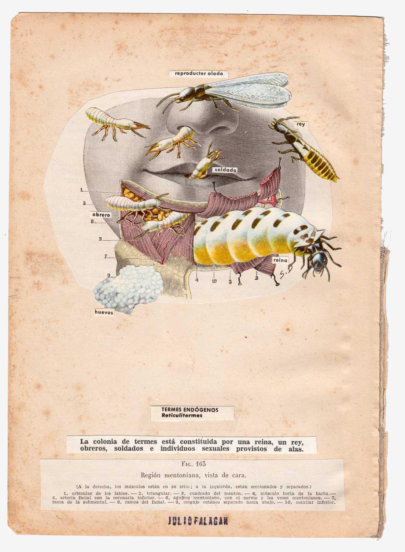 anatomia-silvestre-termes-julio-falagan